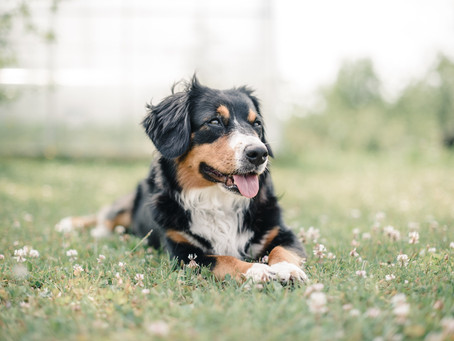 GOOD HYGIENE PRACTICES FOR YOUR PETS AT HOME