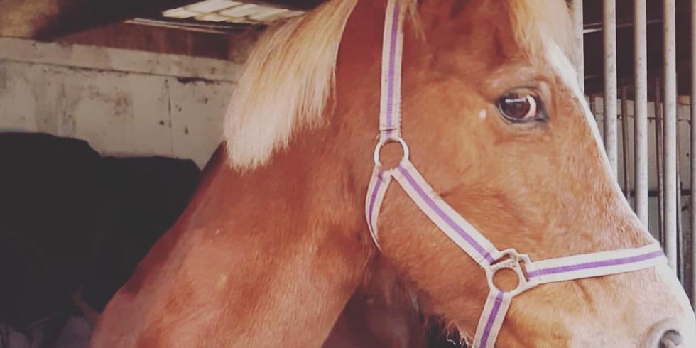 Pony club weeks EVERY school holiday!!