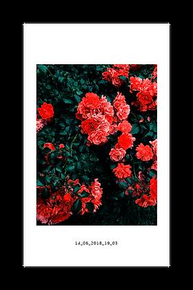 14_06_2018_19_03