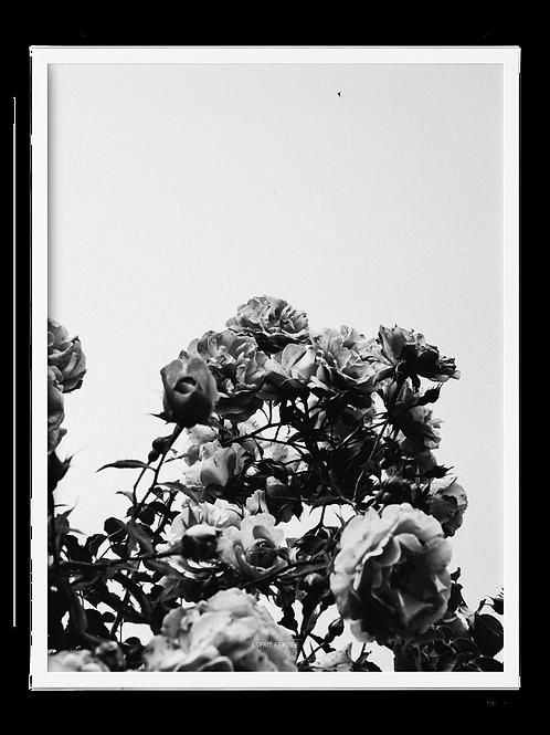 Fleur du dimanche