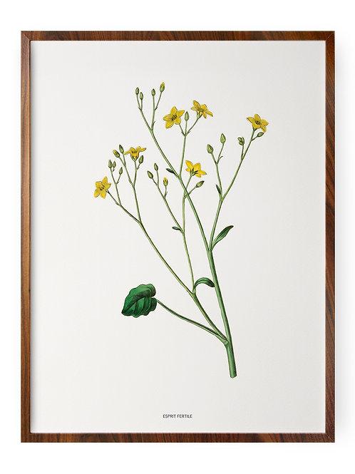Fleur Printemps