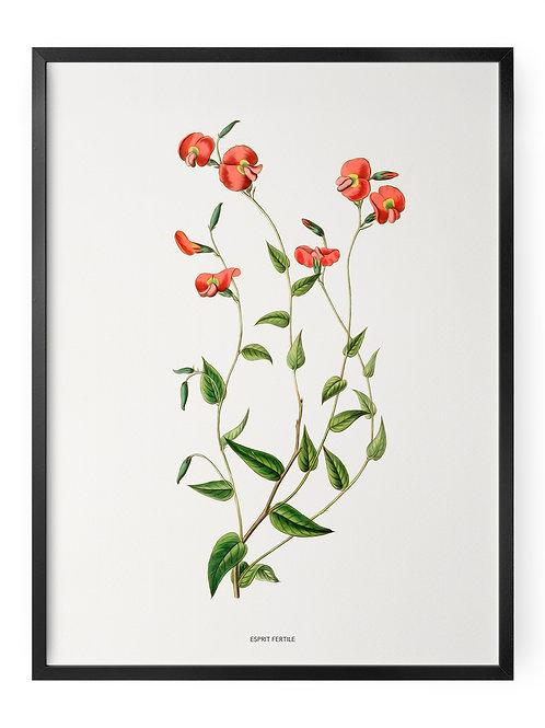 Fleur Enivrante