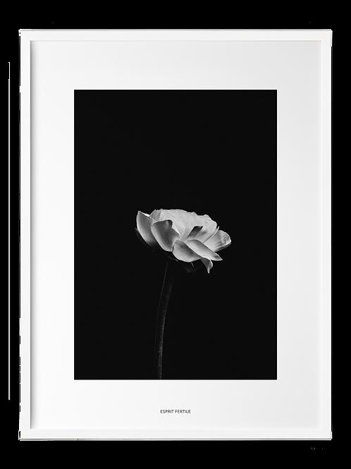 Fleur Minimale