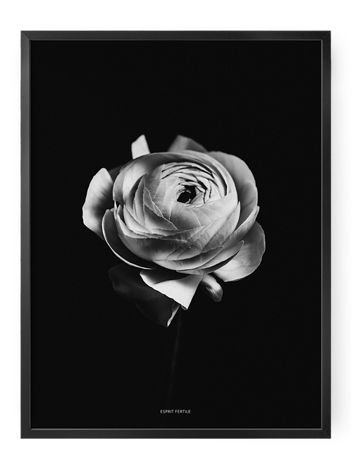 Fleur Merveilleuse