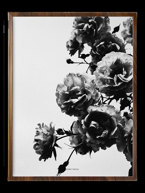 Roses Infinies