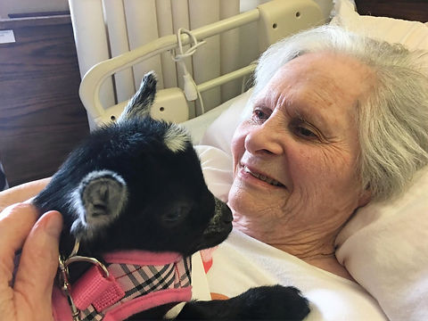 Activities. Town Hall Estate resident with baby goat.