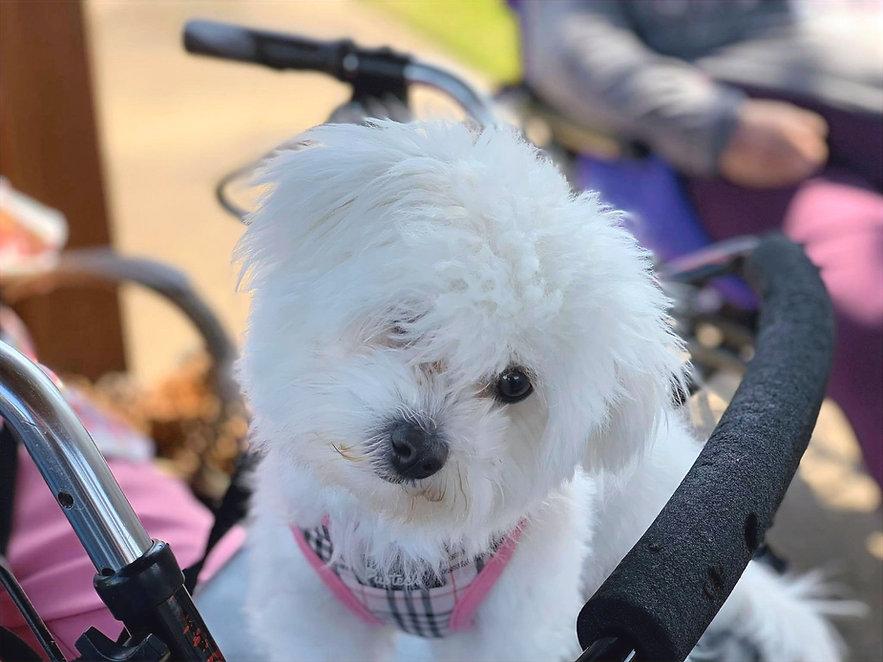 THE Activity Volunteer Dog