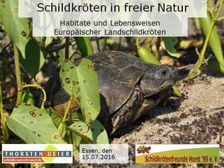"""Schildkröten in freier Natur"""