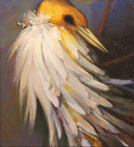 Bird, Later