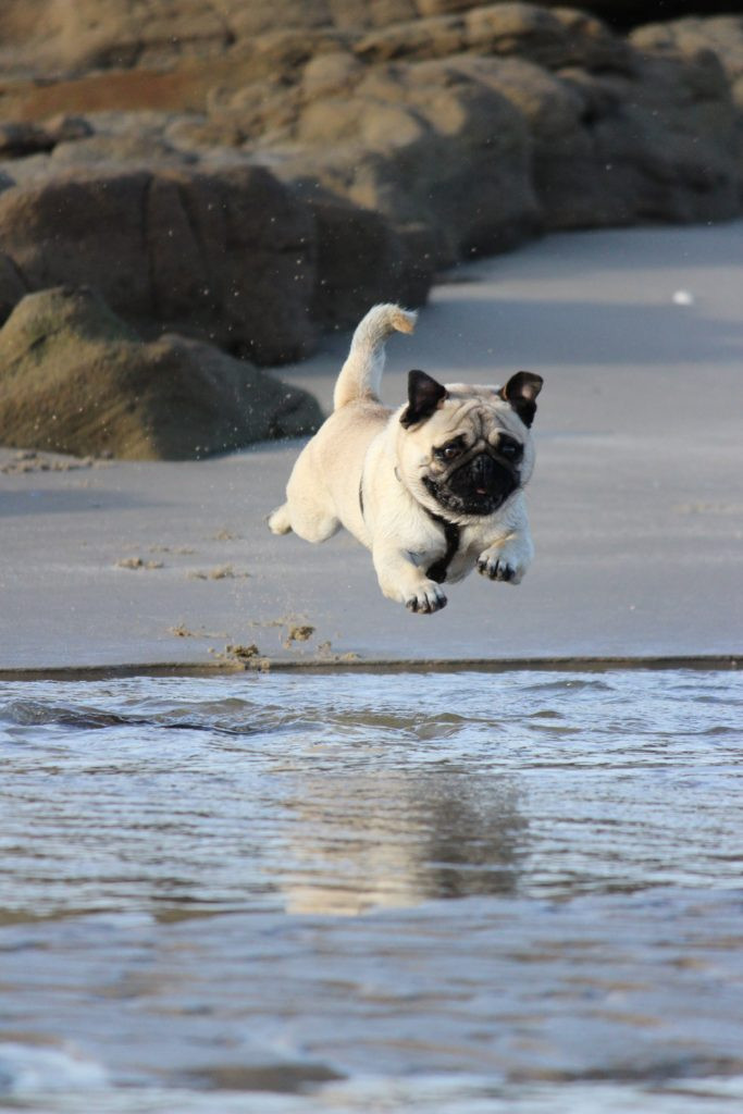 dog leaping over water