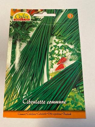 Sachet semence Ciboulette commune