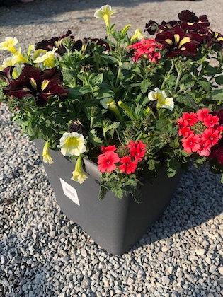 Bac carré MIX plantes type anglaise 4,6L