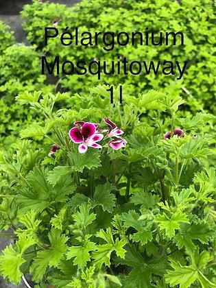 Pelargonium Odorant senteur citron idéal contre les moustiques pot 1L