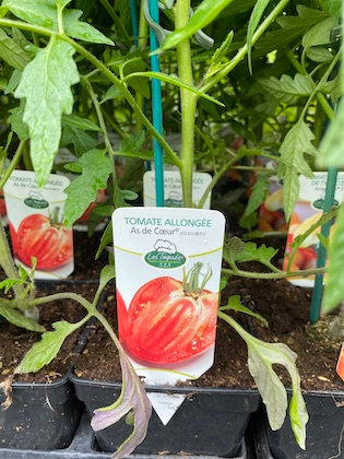 Tomate greffée Allongé As de Coeur