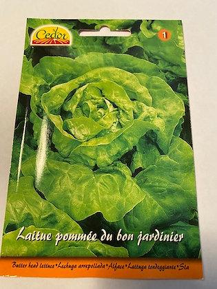 Sachet semences Laitue pommée du bon jardinier