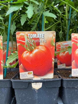 Tomate greffée Fleurette F1