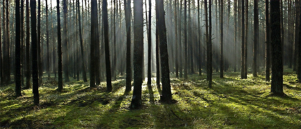 forest-2370476_1920_edited_edited.jpg