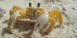 siri, guaça, praia do cumbe
