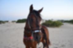 Turismo cavalo dunas cumbe