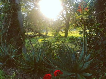 La Paz al amanecer
