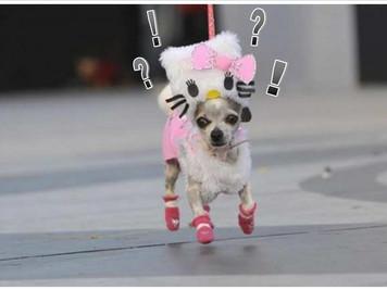 Vestirlo ad Halloween o a Carnevale? Perché?
