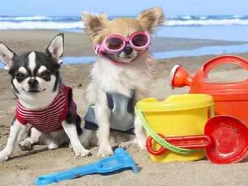 Andiamo in Vacanza... Quando?