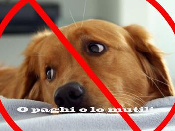 Nuova tassa sui cani: ecco come funzionerà