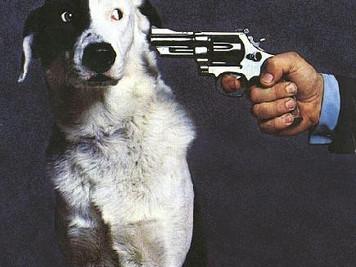 NO alla tassazione dei cani non sterilizzati