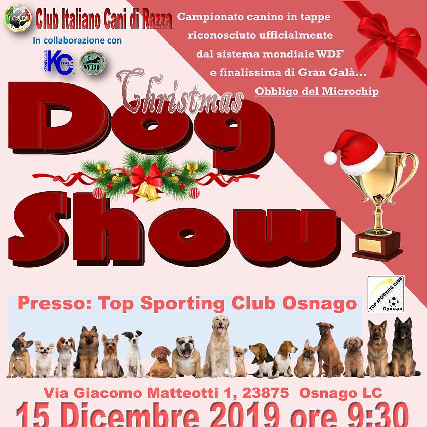Christmas Dog Show di Fine Anno