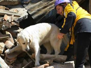 Cani nei Terremoti