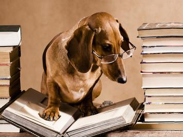 Proprietario del cane ma non del Pedigree?