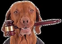 Consulenza Legale ICBD