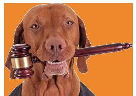 Consulenza Legale Gratuita per i Soci