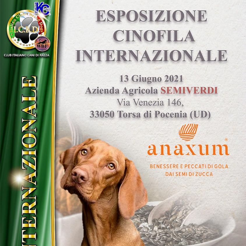 Esposizione Internazionale di Udine