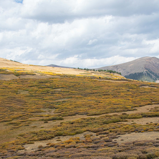 Guanella Pass Summit, Autumn Colors