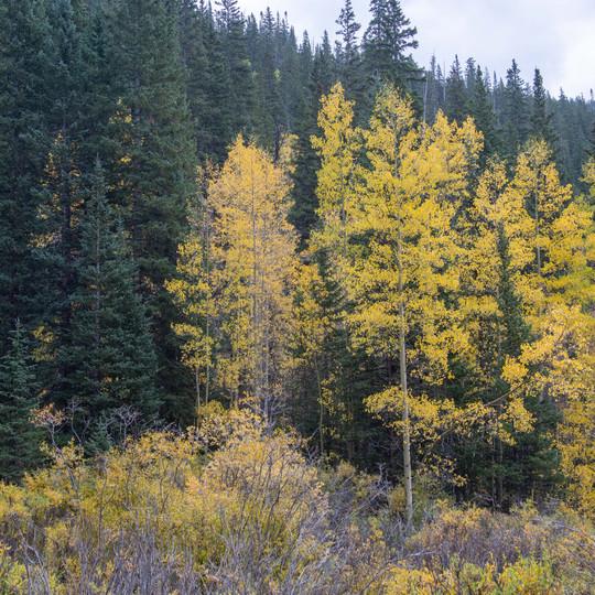 Guanella Pass, Colorado Autumn Colors