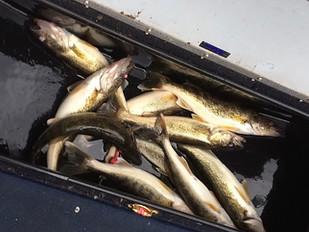 Winnebago System Fishing Report - 04/27/17