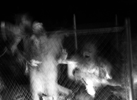 'Savageland' & The Horror of Photo Manipulation