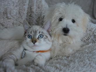 Rappel aux propriétaires de chats et de chiens