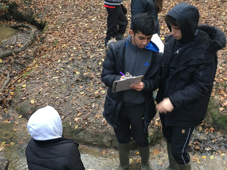 Year 11 Epping Forest Field Trip