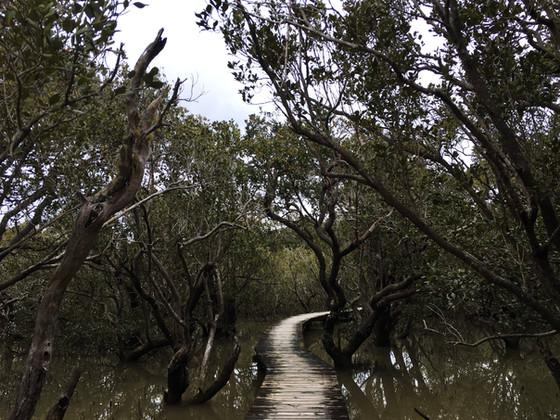 Haruru Falls Mangrove Walk