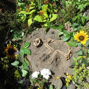 Sammy cat's second burial by Sarah Caputo