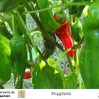friggitello-paprika-samen-02.jpg