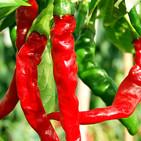 chili-cayenne.jpg