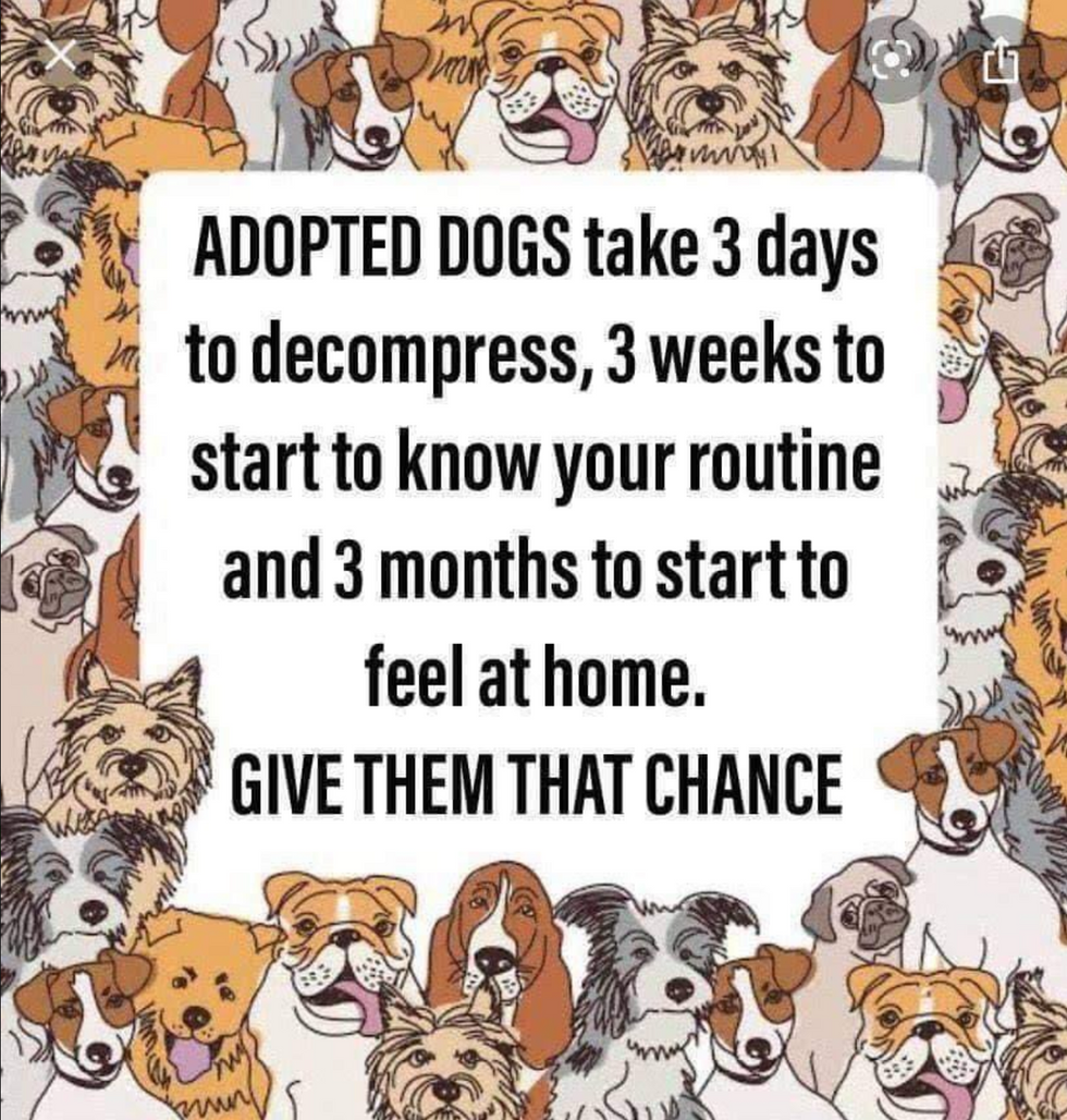 Please Give Them a Chance