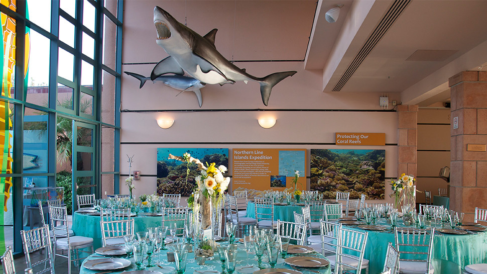 Your guests will enjoy indoor or outdoor aquarium spaces, nearly all feature engaging exhibits.