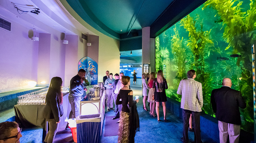 Your guests can explore the underwater through the entire aquarium with food and drink in hand.