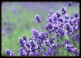 こんにちは、暖かい日が続き 大型連休が控えてますね。 今日、紹介するのはラベンダーの香りがする サドルです!!!