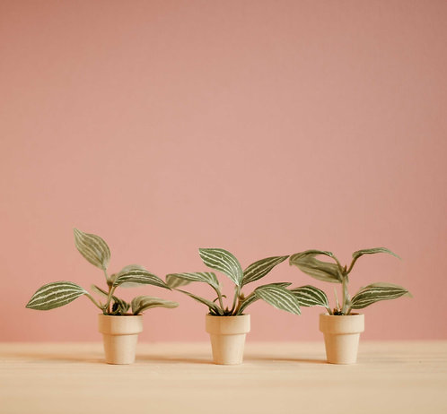 Pin Stripe Potted Plant