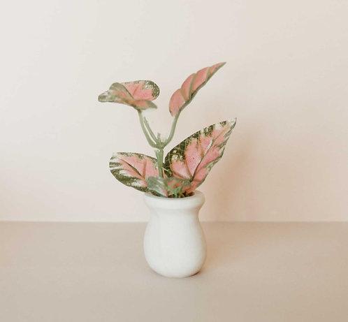 Pink Leaf Potted Plant